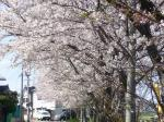 桜4-23-2