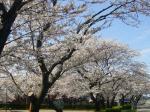 桜4-23-1