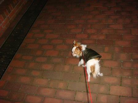 20080119夜散歩ケン