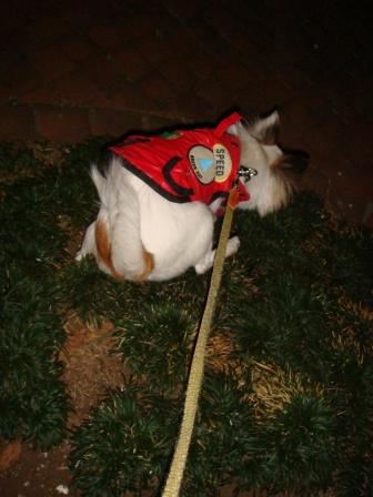 20080119夜散歩モモ
