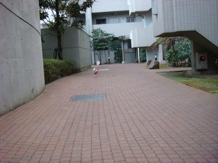 20080120朝一人散歩モモ2