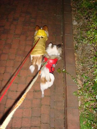 20080122朝散歩