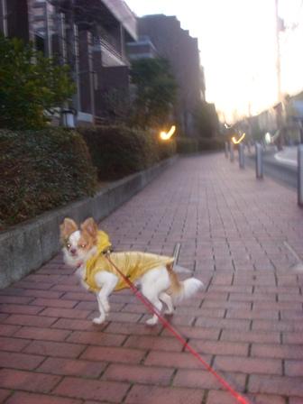 20080130朝散歩