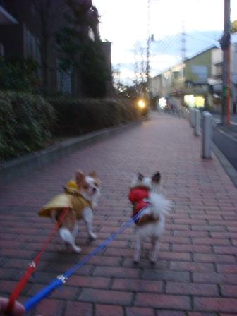 20080131朝散歩