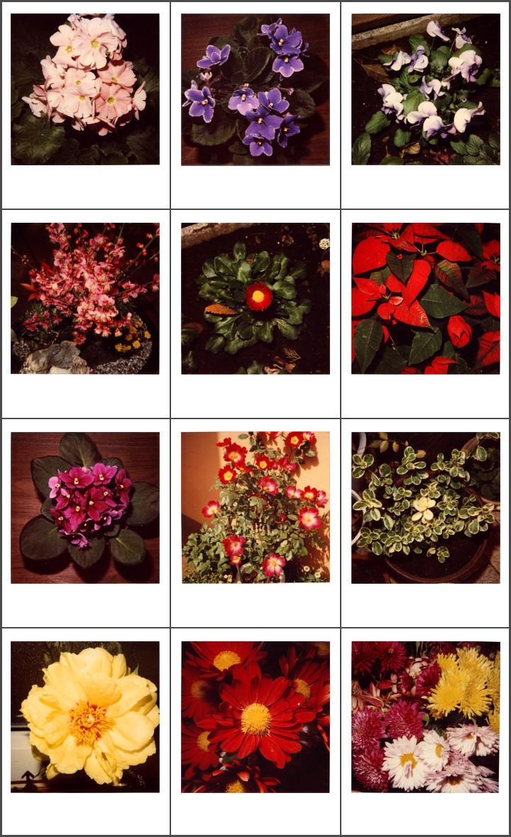 Poraloidの花