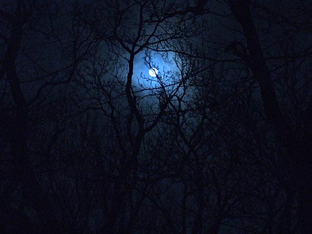 月_080321