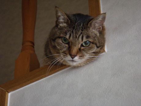階段から覗き込むみーちゃん