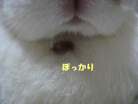 IMG_3680.jpg
