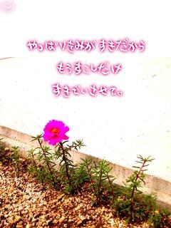 image4340579.jpg