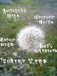 middle_1185254234.jpg