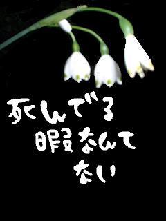 middle_1186974137.jpg