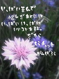 middle_1187334577.jpg