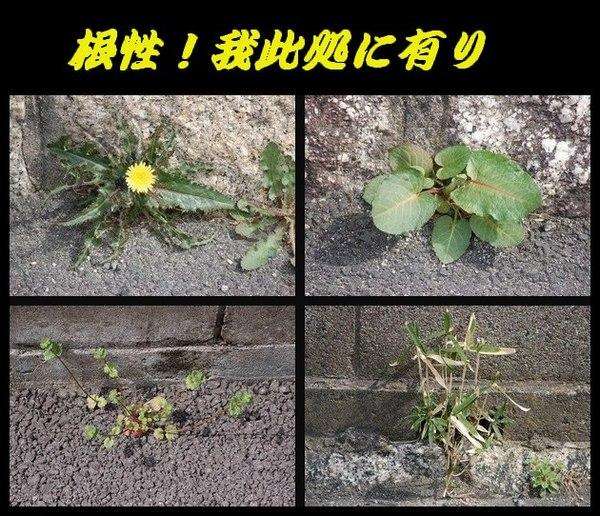 DSC_0040-2-2-2.jpg