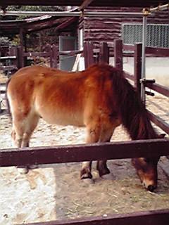 リトルワールド 国産馬