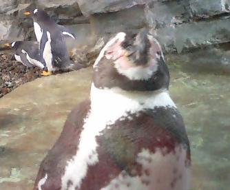 ペンギン sleep