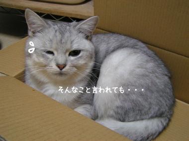 95_20080213224222.jpg