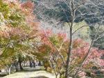 川沿いの木も紅葉してました。紅葉見物の人も・・・・・