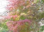 紅葉した木も所々に・・・・・