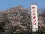城山公園の桜は22時までライトアップされてます