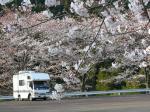 桜とキャンピングカー by 奥山公園付近無料駐車場にて