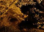 浜松市北区引佐町の奥山公園の桜です