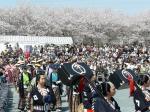 都田川桜堤の桜もハラハラと舞い散っていていい感じ