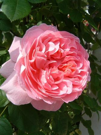 mary-rose08-1.jpg