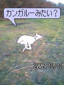 20060819214151.jpg