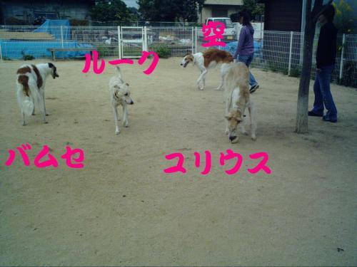 20061015211257.jpg