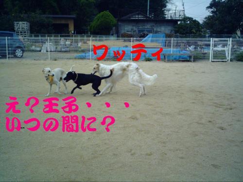20061015211706.jpg