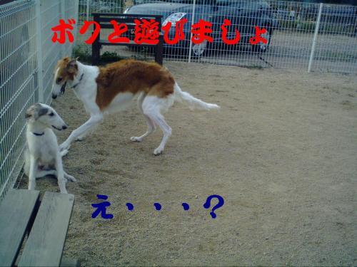 20061015212511.jpg