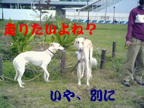 20061015213734.jpg