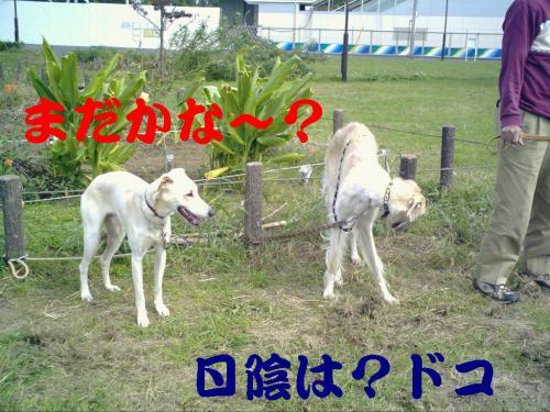 20061015213821.jpg