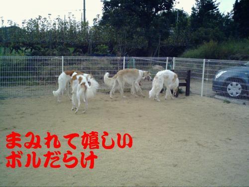 20061018230415.jpg