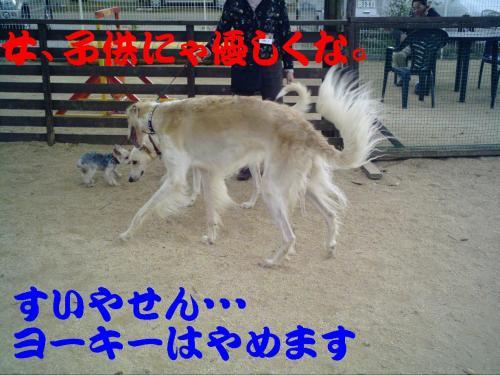 20061019220316.jpg