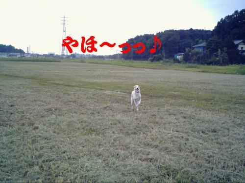20061020214112.jpg