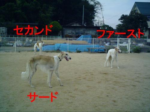 20061020215444.jpg