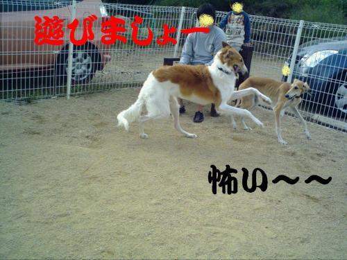 20061020220158.jpg