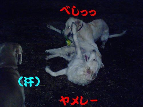 20061027212935.jpg