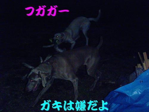 20061027213115.jpg