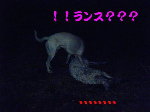 20061027215133.jpg