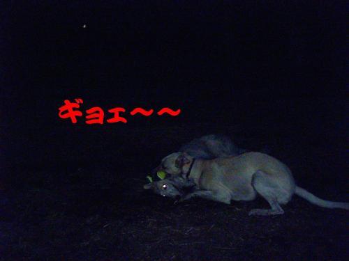 20061027215616.jpg