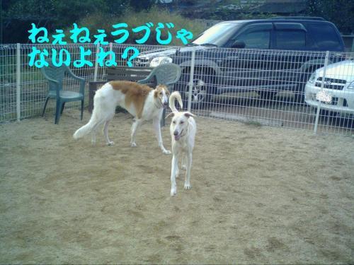 20061028234529.jpg