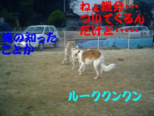 20061029155115.jpg