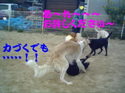 20061031130327.jpg