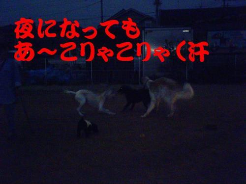 20061031133341.jpg