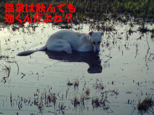 20061101220147.jpg