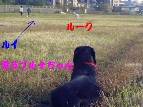 20061103210008.jpg