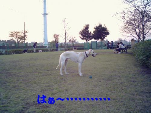 20061109220004.jpg