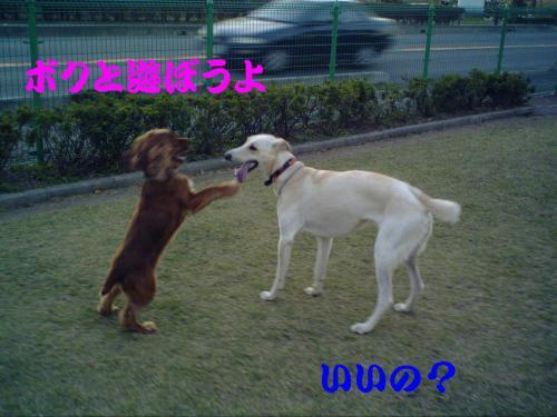 20061109220501.jpg